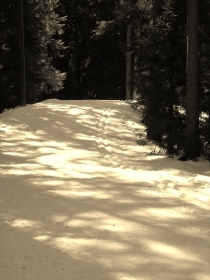 The ski route through my forest. I sepia-coloured the photo but the original might be fresher and nicer...or we can imagine it was..shadows, to me, are almost imaginary, not tangible, touchable - I enjoy the shadow patterns here.