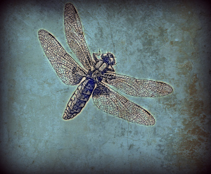 Blue Dragonfly. Graphics Fairy.